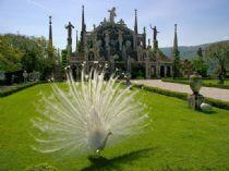 Isola Bella: les jardins